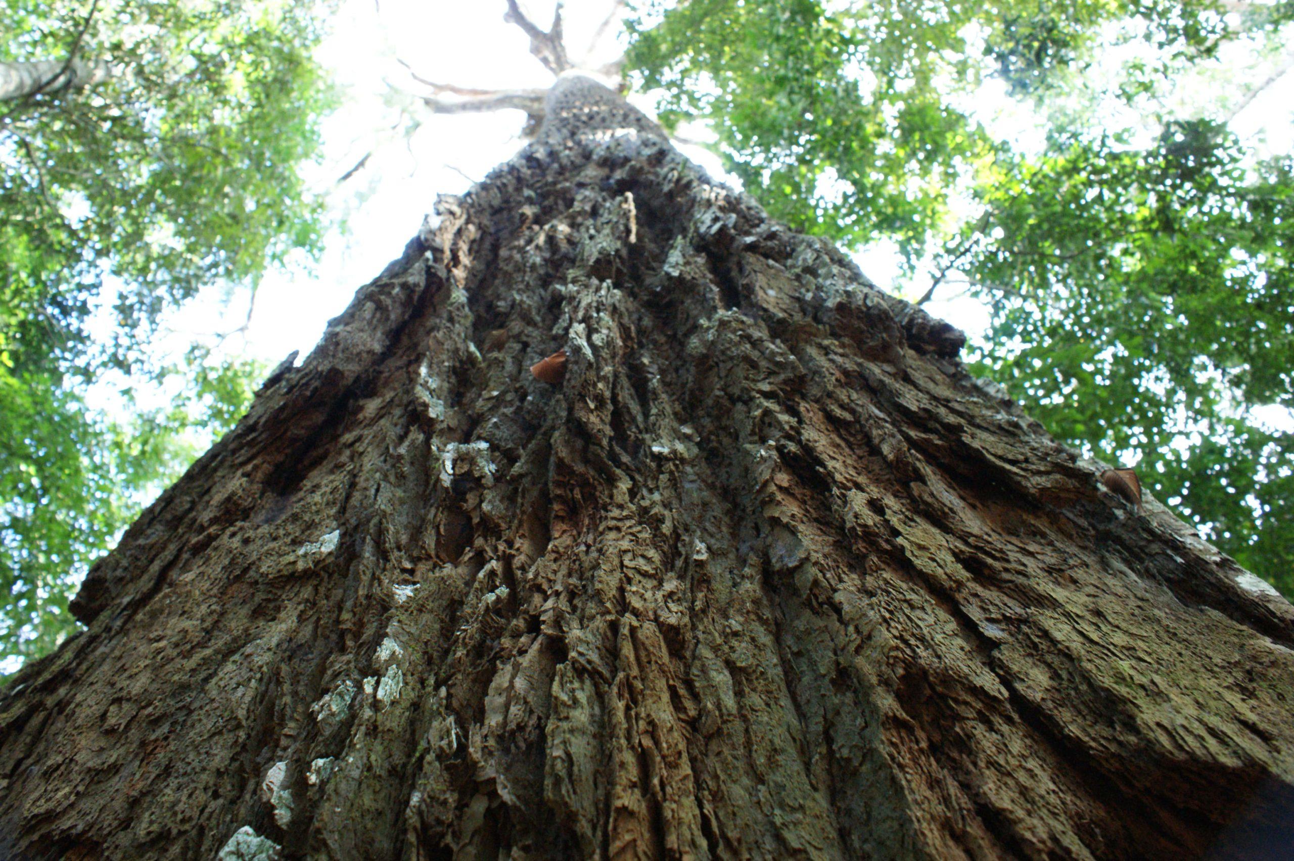 photo d'un tronc de jungle tropicale