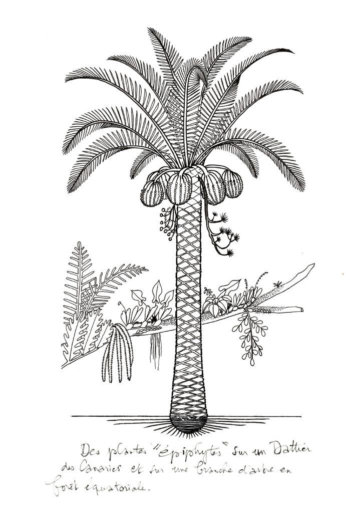 dessin de Francis Halle