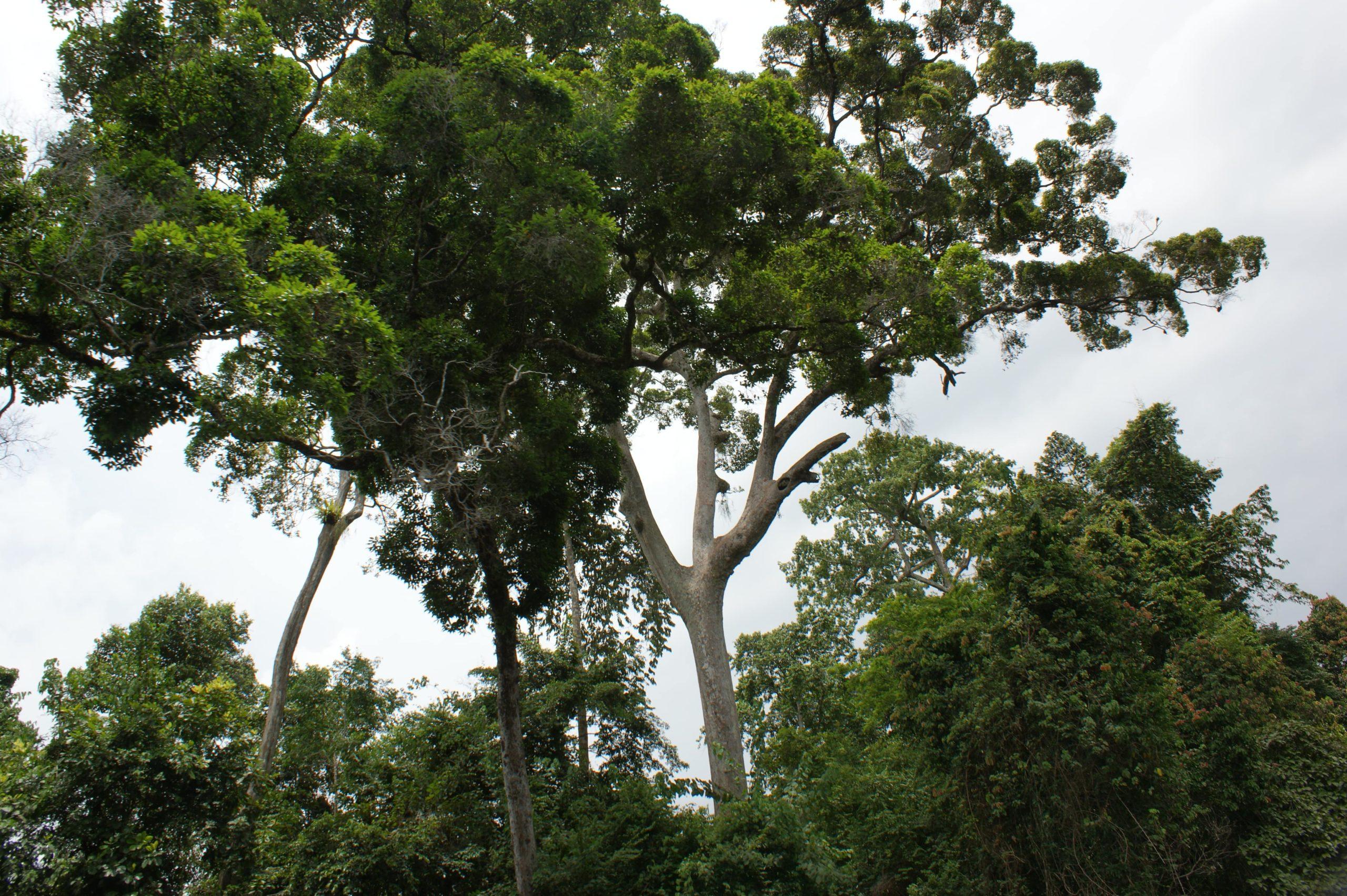 photo de jungle tropicale