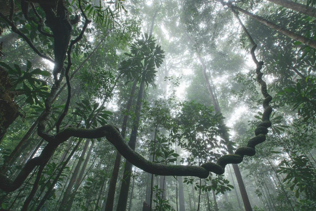 Forêts Sauvage 1