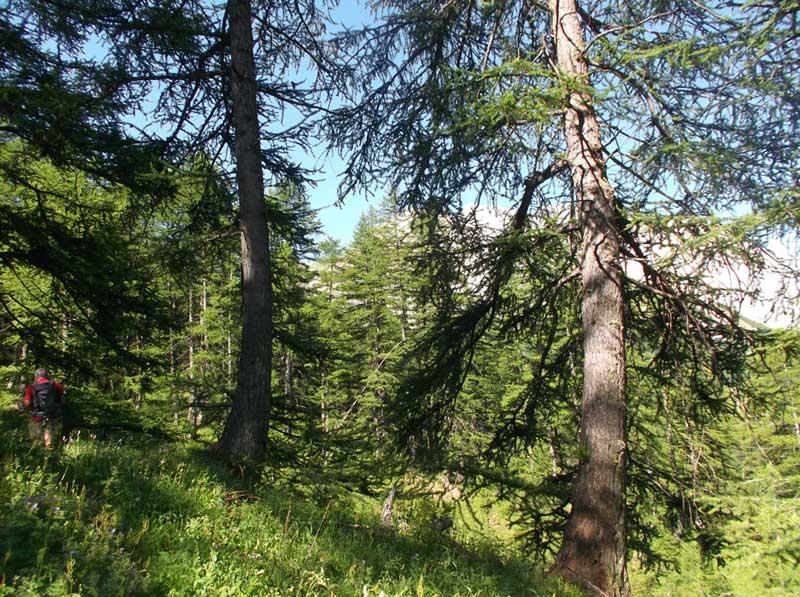 La Gimette C Herve Gasdon President De La Societe Alpine De Protection De La Nature
