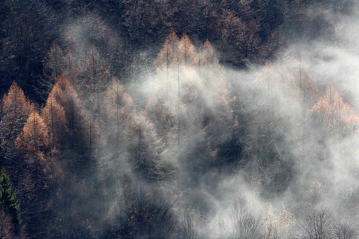 etats généraux de la forêt