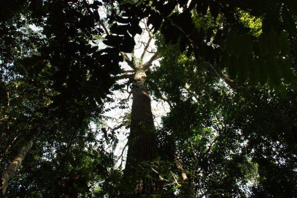 photo jungle tropicale